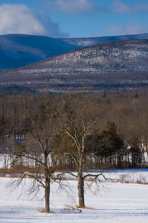 I oslated these 'twin trees' using a telephoto lens. The Catskills are in the background.
