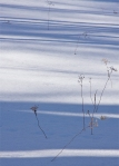d-bush_winter-shadows-I