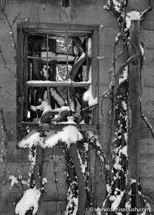 'Outside In' © Denise Bush