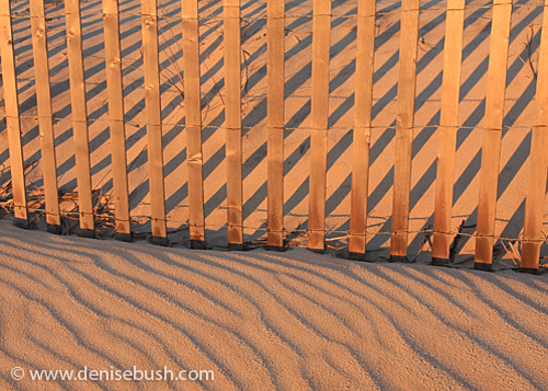 Sand Stripes © 2009 Denise Bush