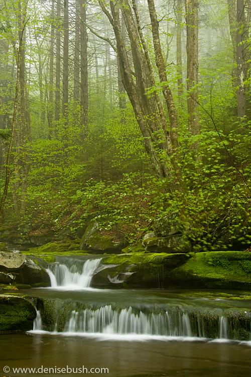 'Lower Falls' © Denise Bush