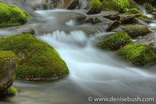 'Mossy Rocks' © Denise Bush