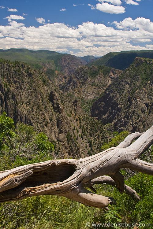 'Black Canyon View' © Denise Bush