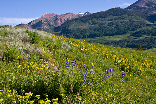 'Colorado Wildflower Hill' © Denise Bush