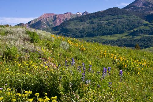 'Colorado Wildflower Hill' © Denise Bush