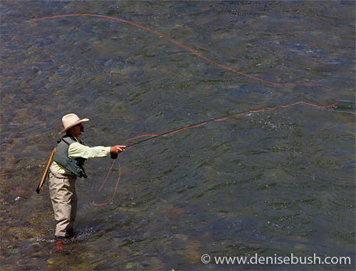 'Fly Fishing' © Denise Bush