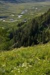 D Bush_Gunnison River