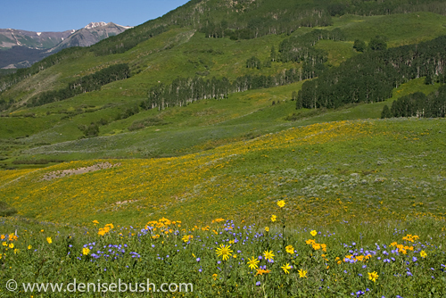 'Rocky Mountain Scenic' © Denise Bush