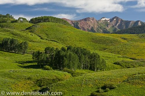 'Rocky Mountain View' © Denise Bush