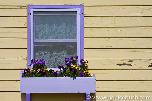 'Yellow House, Purple Trim' © Denise Bush
