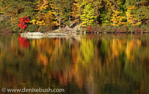 'Autumn Afternoon' © Denise Bush