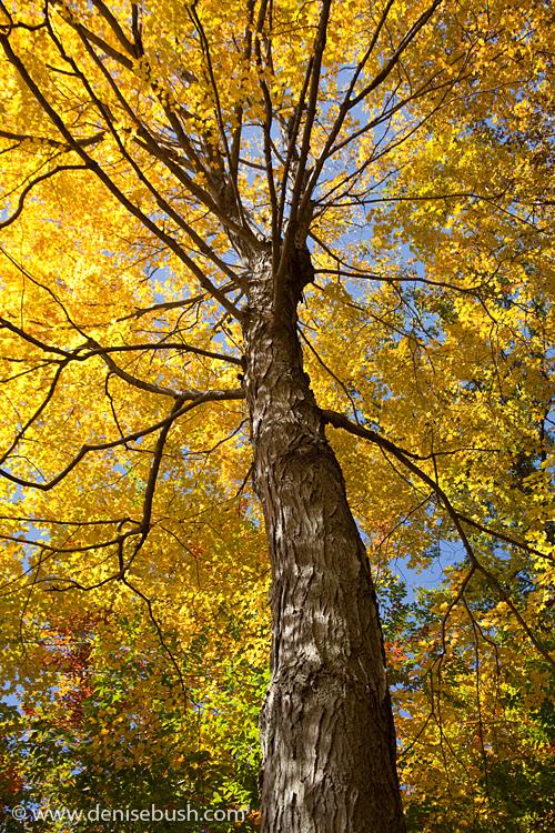 'Autumn Glow' © Denise Bush