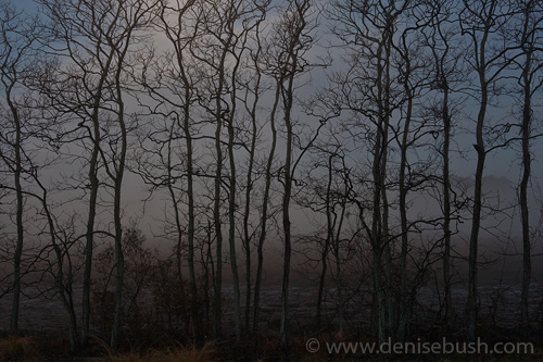 'Before The Dawn'  © Denise Bush