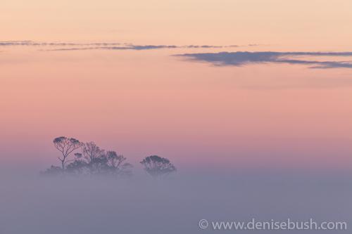 'Beyond The Fog'  © Denise Bush