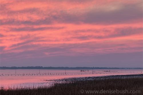 'Chincoteague Island Sunset'  © Denise Bush