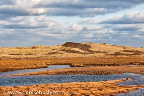 'Race Point Dunes'  © Denise Bush