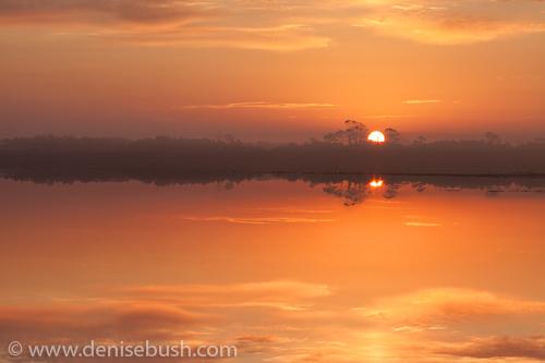 'Snow Goose Pool Sunrise'  © Denise Bush