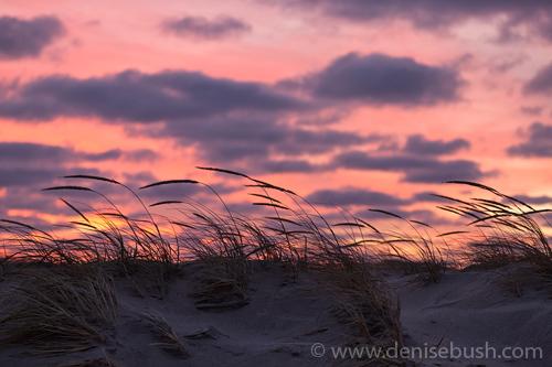 'Sunset Close-up'  © Denise Bush