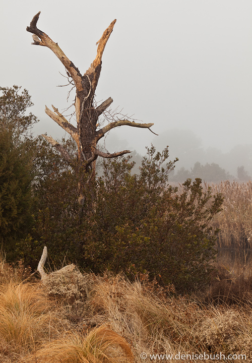 'Warm Light & A Dead Tree'  © Denise Bush