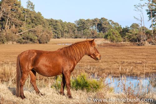 'Wild Pony'  © Denise Bush