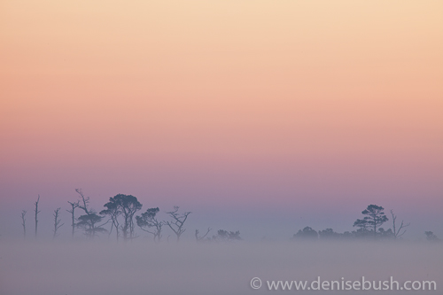 'Zen Sunrise At Chincoteague'  © Denise Bush
