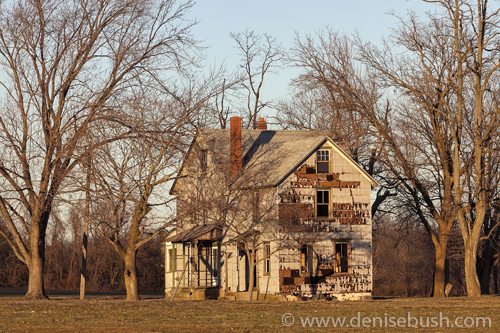 'The Tenant House'  © Denise Bush