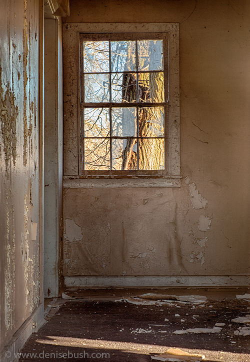 'Tree Out Back'  © Denise Bush