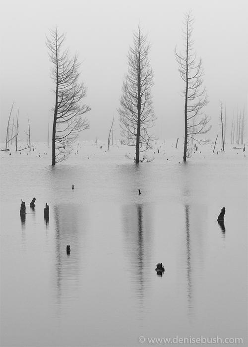 'Fog & Three Trees'  © Denise Bush