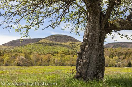 'Spring Green in the Catskills'  © Denise Bush