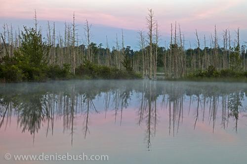 'A Stripe Of Pink'  © Denise Bush