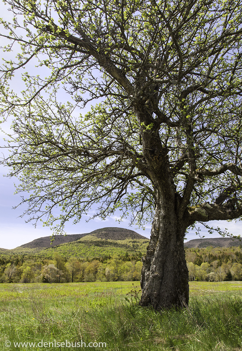 'Bending Tree'  © Denise Bush