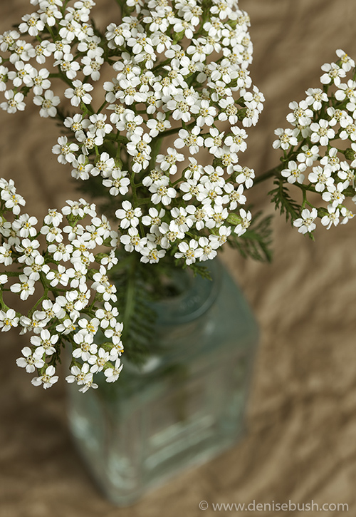 'Bottled Yarrow'  © Denise Bush