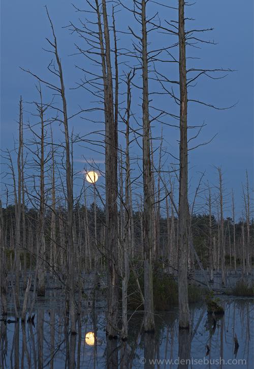 'Goodbye Moon'  © Denise Bush