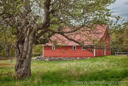 'Little Red Barn'  © Denise Bush