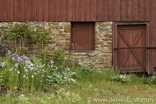 'Phlox Beside The Barn'  © Denise Bush