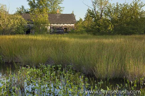 'Swamp Shack'  © Denise Bush