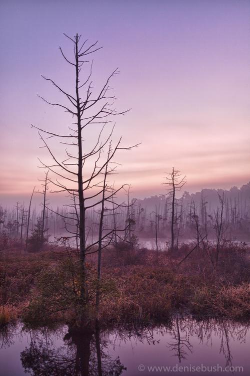 'Preserve At Dawn'  © Denise Bush