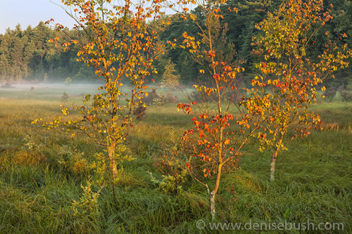 'Signs Of An Early Fall'  © Denise Bush