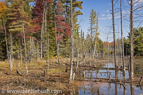 'Autumn Bog'  © Denise Bush