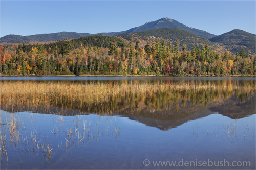 'Autumn Comes to Connery Pond'  © Denise Bush