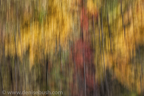 'Autumn Pan'  © Denise Bush
