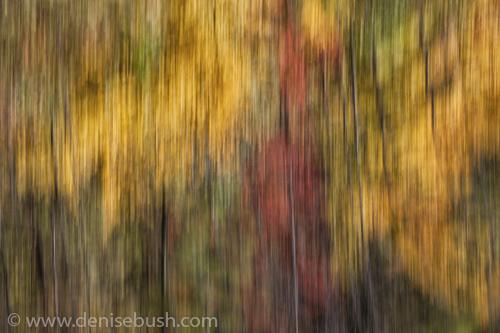 'Autumn Pan'  © Denise Bush