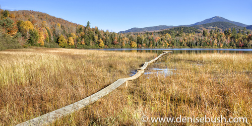 'Connery Pond Boardwalk'  © Denise Bush