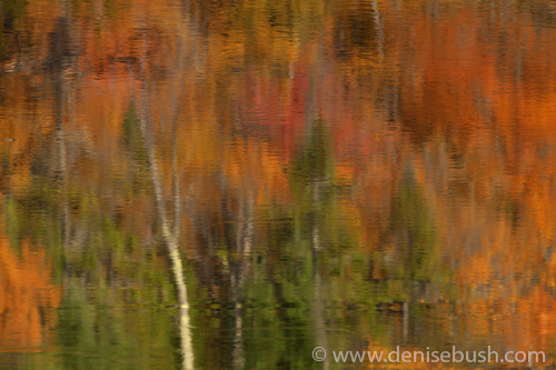 'Reflections Of Fall'  © Denise Bush