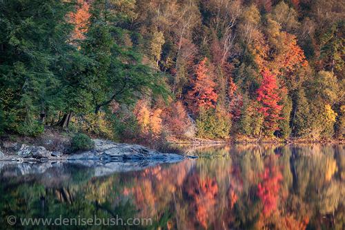 'Tree Lighting'  © Denise Bush