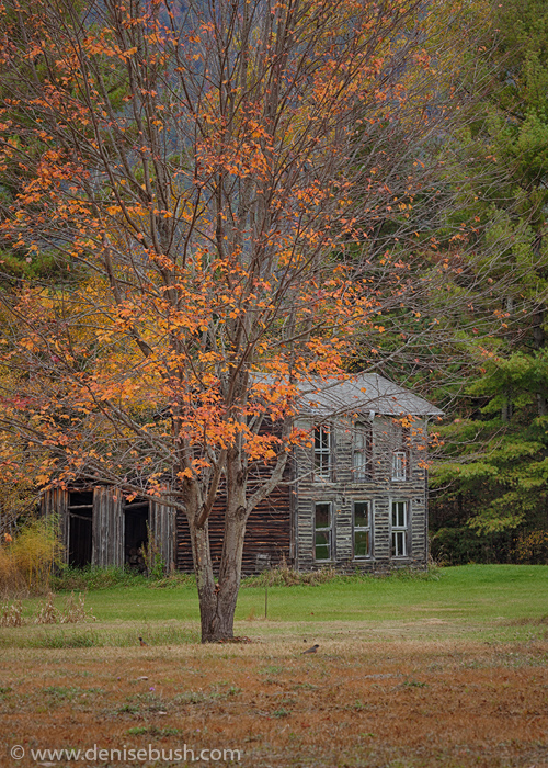 'Abandoned In The Adirondacks'  © Denise Bush