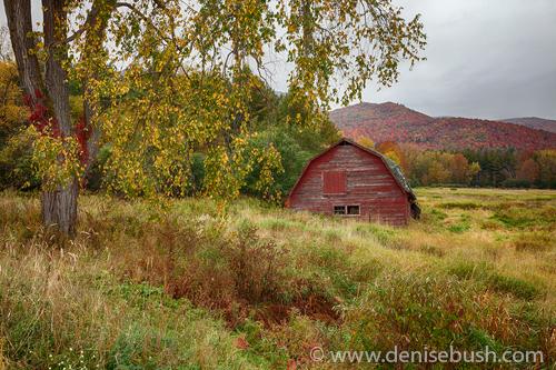 'Adirondack Barn In Autumn'  © Denise Bush
