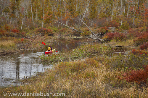 'Adirondack Kayaker'  © Denise Bush