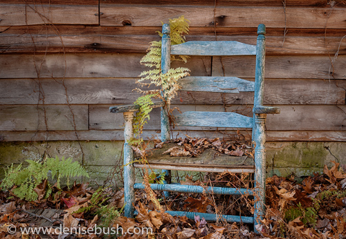 'Blue Chair'  © Denise Bush