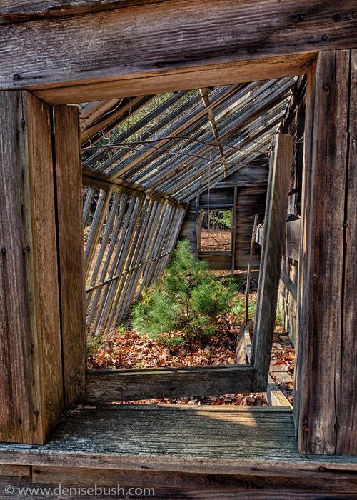 'Greenhouse Resident'  © Denise Bush
